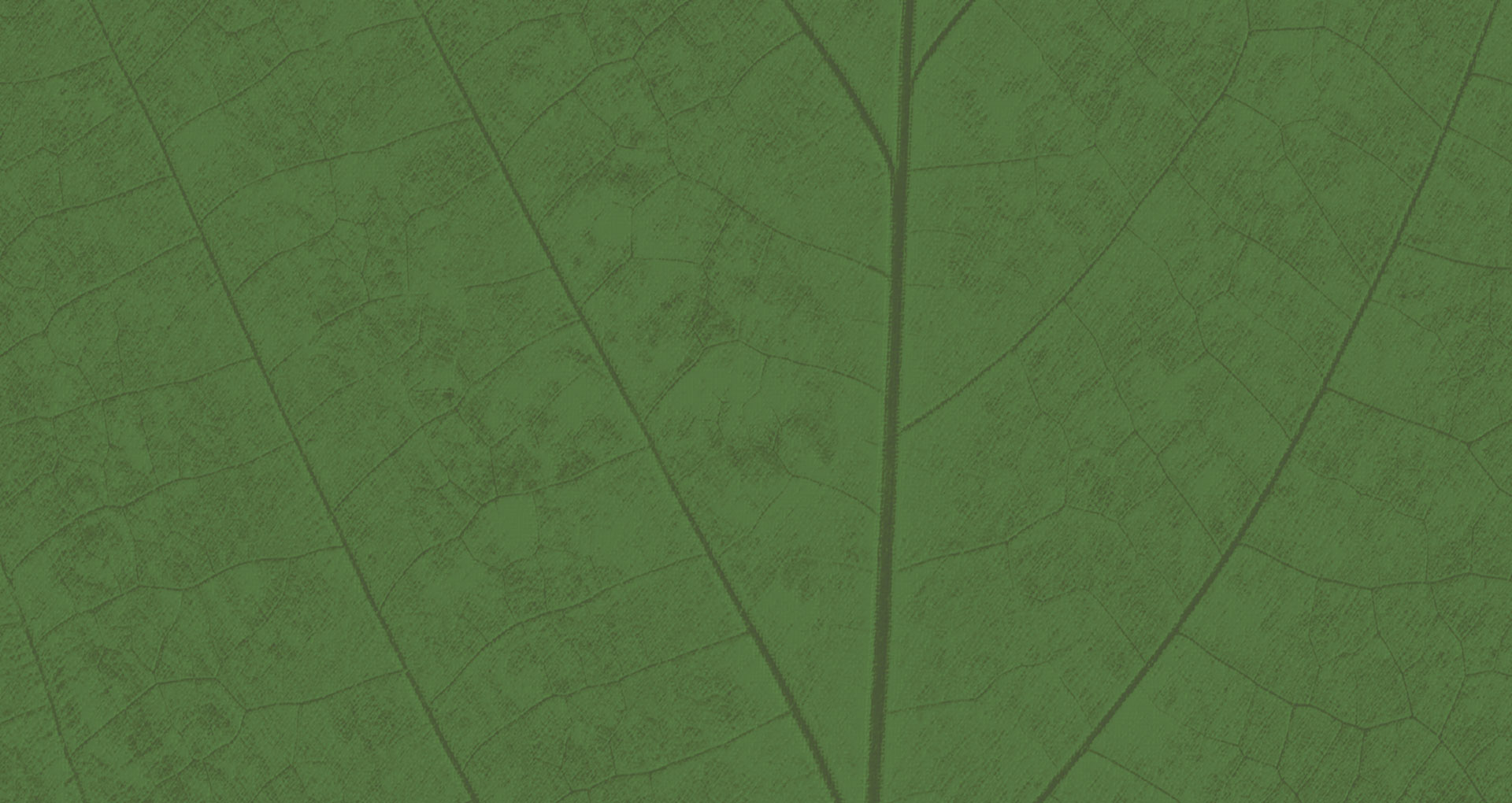 Slide_BG-leaf
