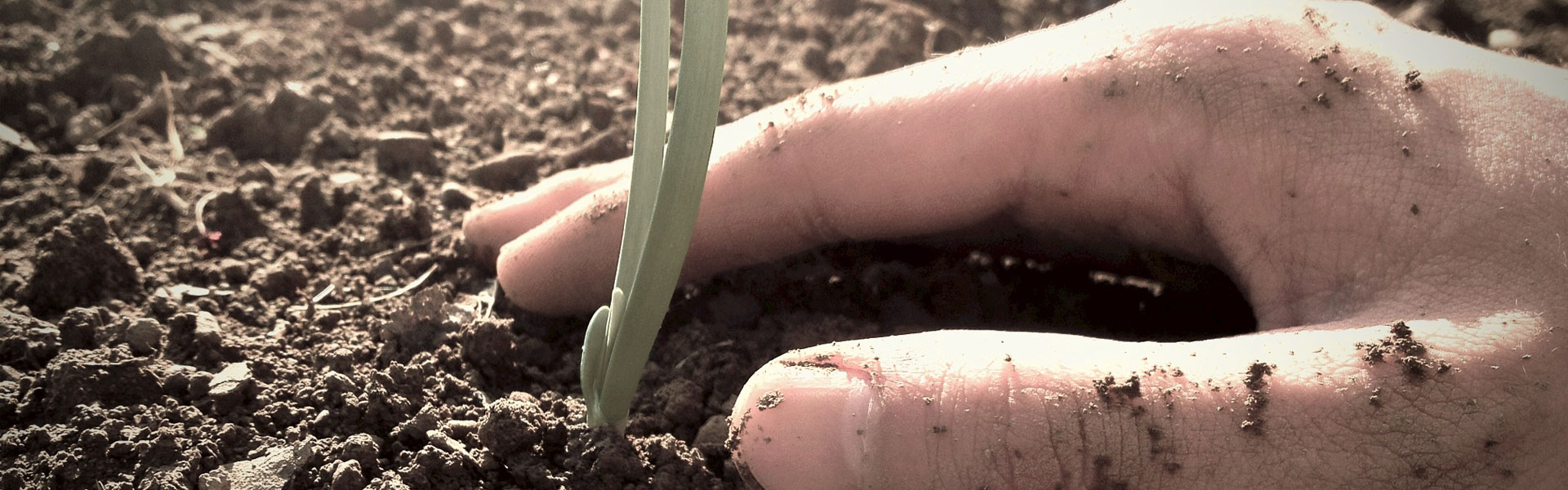 hand-plantingforWeb